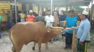 Kepala DKPUS Babel Dr Asyraf Suryadin beserta Pejabat DKPUS menyaksikan pemotongan hewan kurban, Minggu 2 Ags 2020.